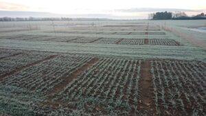 cereal_crop_plots