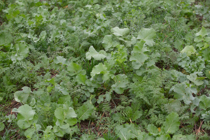 Cover crops_2